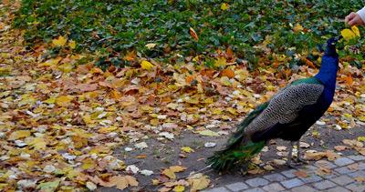 Gute Zeit im Lazienki Park Warschau